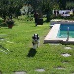 piscina (al momento della foto era aprile quindi non funzionante) con sfondo frutteto