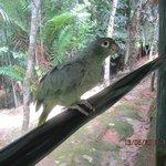 Papagei auf dem Hotelgelände