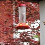 GreenBank hummingbirds