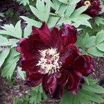 Red Orquid at brooklyn botanical garden