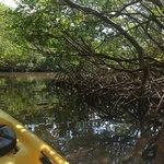 beautiful mangroves