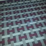 some kind of powder on carpet
