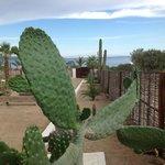 Mr. cacti