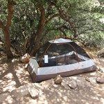 Campsite 10 shade