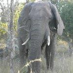 Very Close Elephant