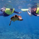 Snorkeling with turtles