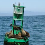 Sea Lions on a buoy during the trip