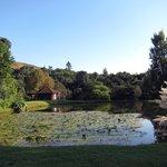 Blick auf den Teich