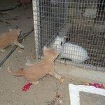 Le jardin abrite aussi quelques chatons et un lapin