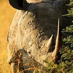 Rare Rhino sighting