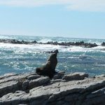 The seals were enjoying the wind and the sun
