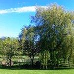 Bickwell Meadow garden