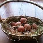 Bickwell Meadow eggs