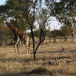 Safari ground