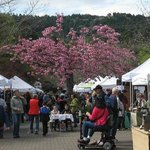 The Saturday Market in the Park