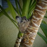 baby hummingbirds just hanging out