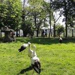 парк на острове Маргит
