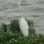Close-up of goose at the lake
