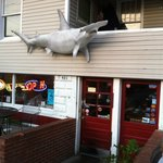 The front of Hammerheads