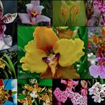 several of 30 orchids ......