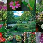Cusin gardens