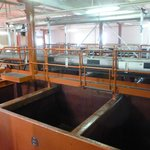The fermenting vats