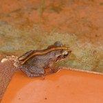 Kleiner Frosch den man hin und wieder sieht