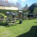 Our lovely garden in the sun