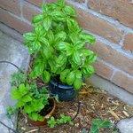 A herb garden!