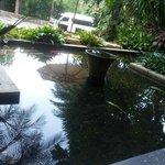 carp pond, one of many