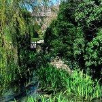 View through the garden