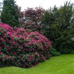 Fabulous Rhododendrons