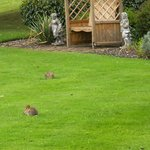 baby rabbits on the lawn