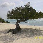 playa y arbol tipico