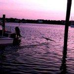 Pelican landing at sunset