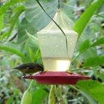 Para que se acerquen los colibries a tomar agua