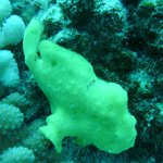 Frog Fish first day of diving