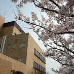 春には桜が綺麗です。