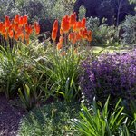 The gardens are designed to bring colour throughout the year