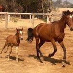 Foto de Ranch de Diabat