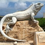 Ode to the Iguana