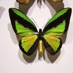 De magnifiques papillons