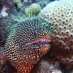 Amazing pic of a moray taken by our DM - Tom