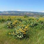 Wildflowers at Rowena Crest