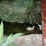 Nice Swan in Dirty Water