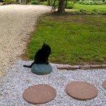 Jezebel, the farmhouse cat