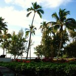 Kalapaki beach palms