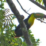 Saw this Toucan in the morning by the river
