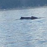 Humpback next to the boat