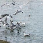 free to  fly in lake